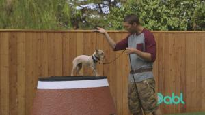 Lucky Dog Seven Commands
