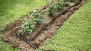 Self Irrigating Lawn