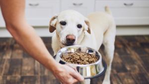 Pet Stop Eating