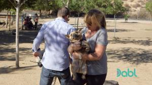 Violent French Bulldog
