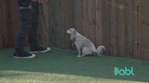 Potty Training - Lucky Dog