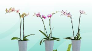 Houseplants for Mom