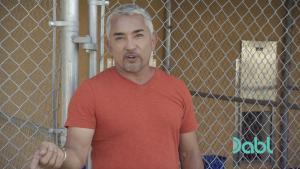 Cesar Explains Dog Body Language