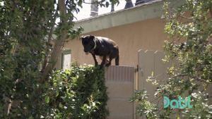 Escaping Dog - Cesar 911