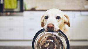 Dog holds bowl