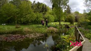 Boggy Garden The Instant Gardener