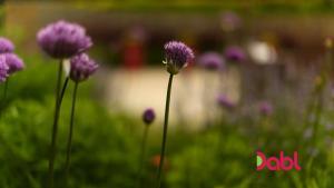 The Instant Gardener Feng Shui