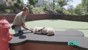 Doggy Door Lucky Dog Training