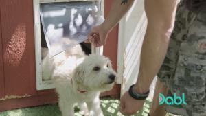 Lucky Dog Doggie Door Training 1