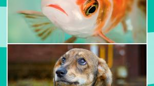 Puppy and fish