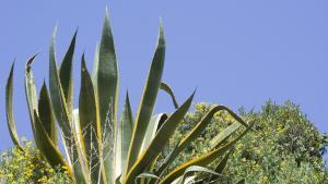 Drought Resistant Garden