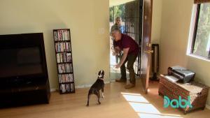 Crazy dog annoys roommates with bad behavior Cesar 911