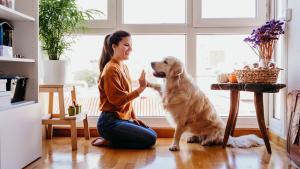 Woman trains golden retriever dog