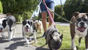 dog walker pack walk
