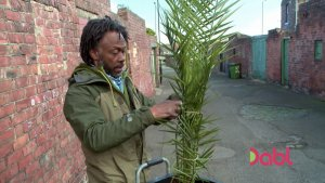Danny and tropical plant palm