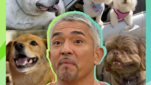 Bad dogs that broke up families with Cesar Millan