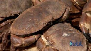 Freshly caught crabs in Norfolk