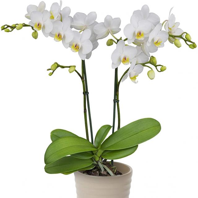 Color Orchids Store