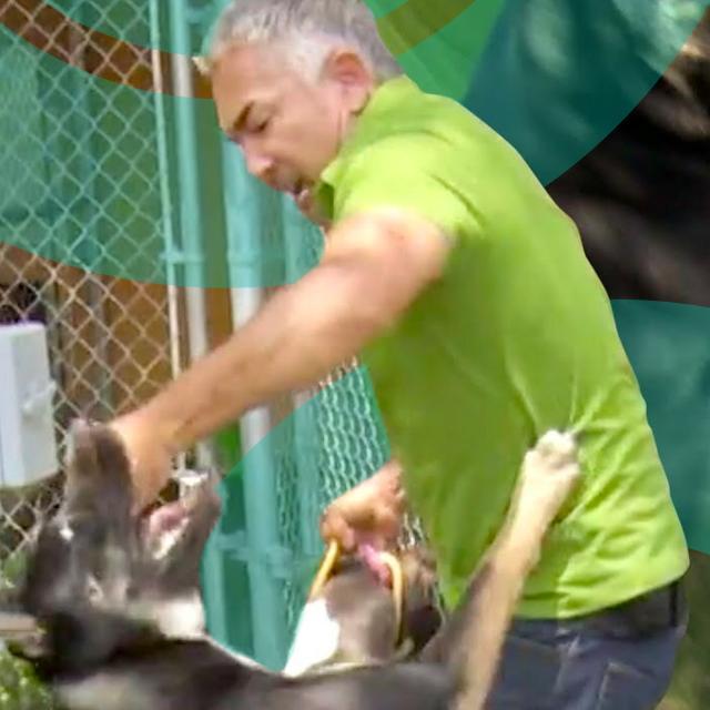 Cesar Hero Image Dog Fight