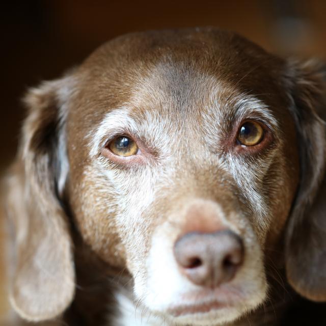 Dog DNA Test