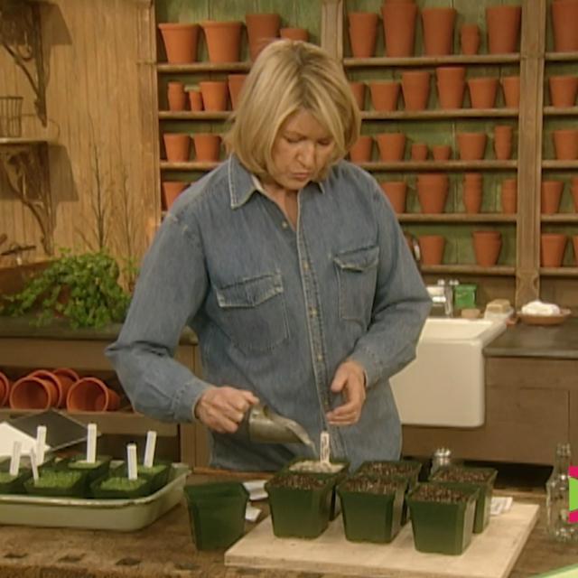 Martha Seed Starting