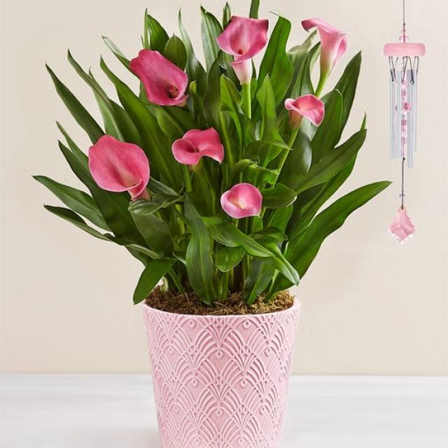 1800-Flowers.com