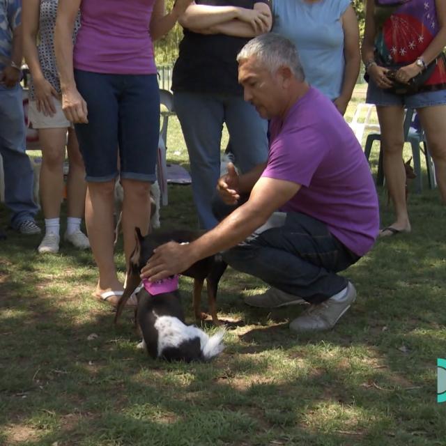 Cesar works with terrier dog park 2