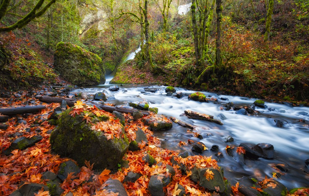 Oregon Fall